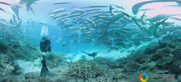 VR全景视频-[场景体验] 《大堡礁海豚群》